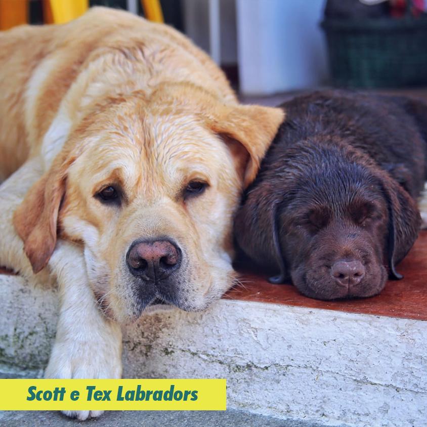 Scott e Tex Ladradors